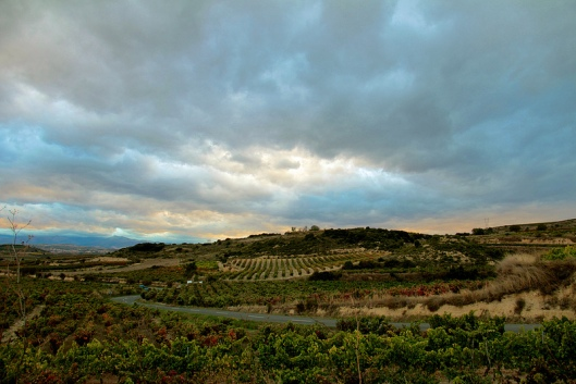Rioja Vineyard at dusk